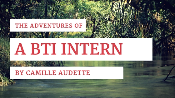 adventures-of-a-bti-intern